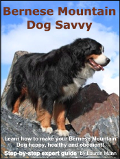 bernese-mountain-dog-ebook